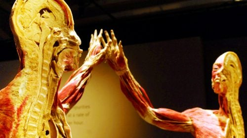 See the Bodies Exhibit at The Luxor Hotel in Las Vegas