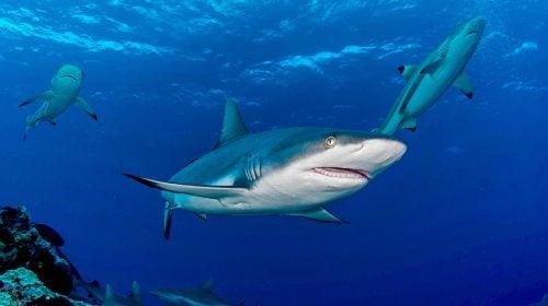 Las Vegas Shark Reef Aquarium at Mandalay Bay