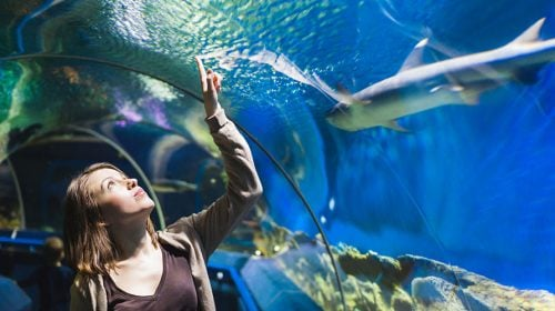 5 Aquatic Adventures – Las Vegas Activities