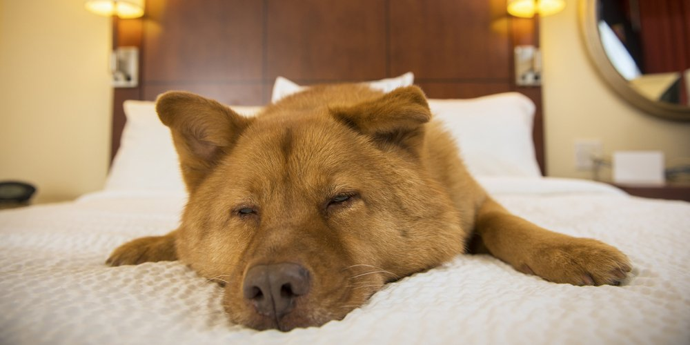 5 Pet Friendly Las Vegas Hotels Both On And Off The Strip