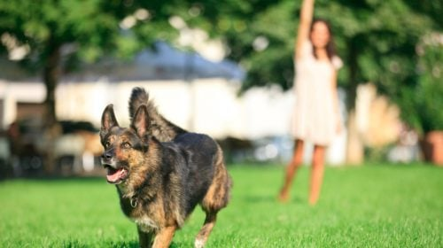 6 Las Vegas Dog Parks to Visit with Your Furry Friend